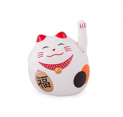 pisica-norocoasa-grasa